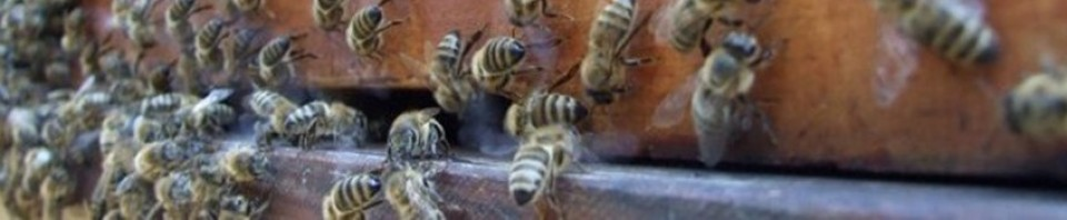 Moray Beekeepers' Association